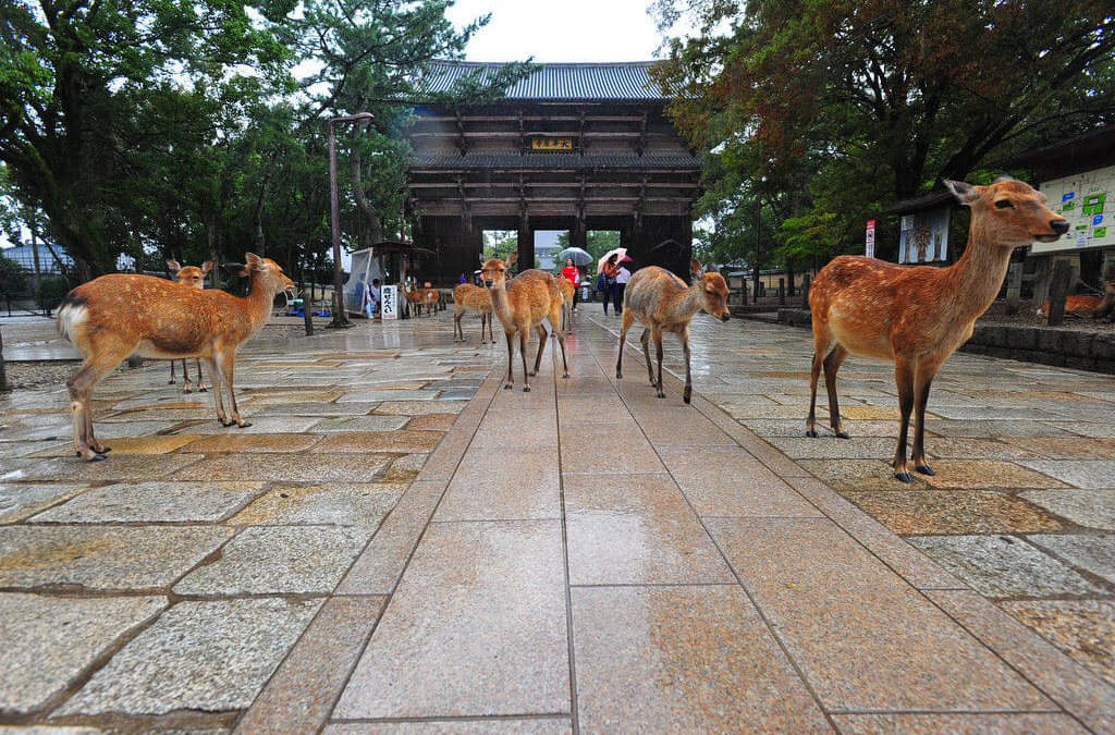 I Ain't Nara Scurred!
