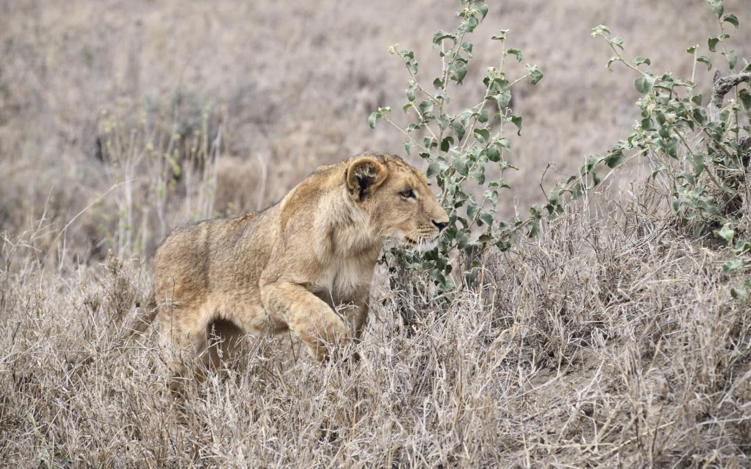 """The Tanzanian """"Safar(i) So Good"""" Epic: The Serengeti Serenade"""