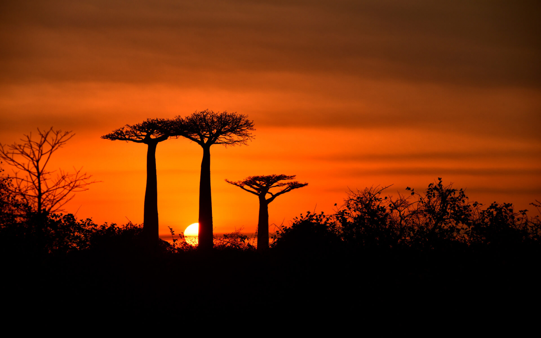 Avenue of the Gods, Avenue of the Baobabs