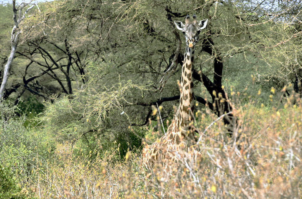 The Tanzanian Safari Epic: Lake Manyara National Park