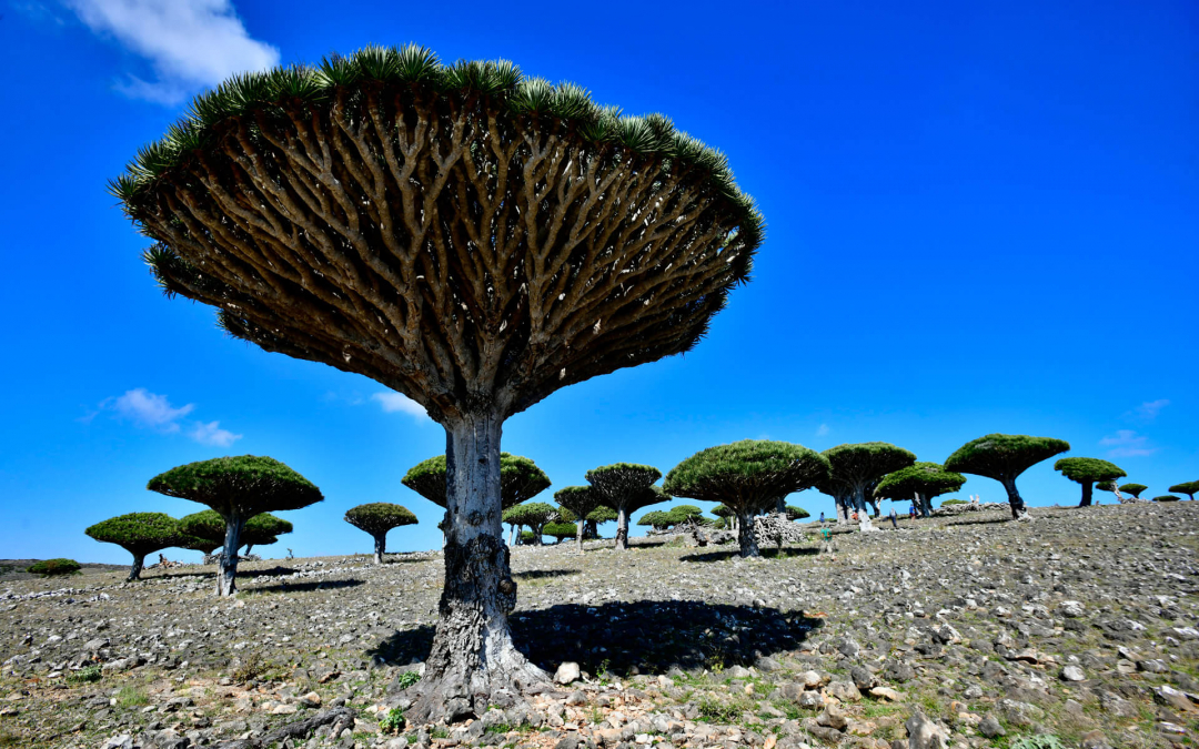 Socotra-pped On An Island Paradise: Day 5 – Always Up to Nogud!