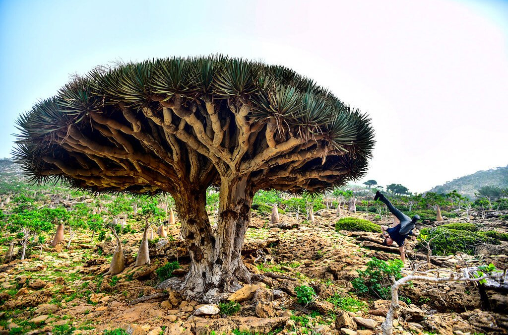 Socotra-pped On An Island!